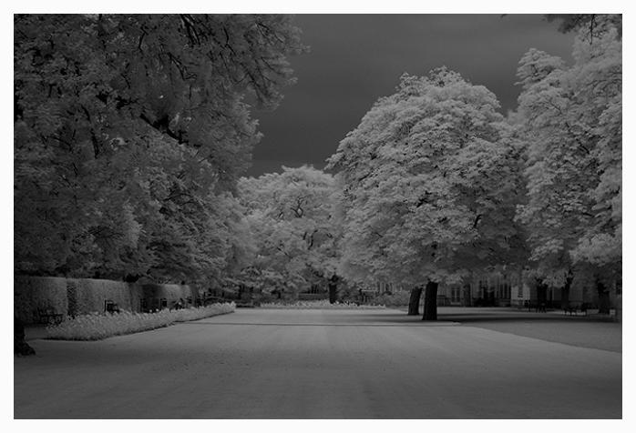 Czerń i biel w fotografii cyfrowej